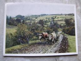 Herbst Im Erzgebirge - Cows Kühe  Vaches  D95635 - Vaches