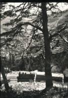 Chemin De Fer D'Yverdon A Ste - Croix ---  Train De Marchandises Dans Les Rapilles De Baulmes ( En 1943 ) - Trains