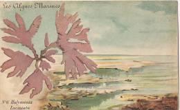 Les Algues Marines - N°6 Halyménia Laciniata [1071] - Sin Clasificación