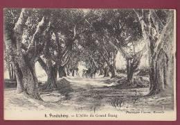 INDE - 050213 -  PONDICHERY - L'allée Du Grand Etang - Indien