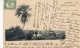 ( CPA AFRIQUE )  DJIBOUTI  /  Palmier Sur La Route De Zeyla  - - Djibouti