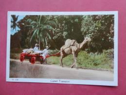 Africa > Kenya  Camel Transport  --- Ref 816 - Kenya