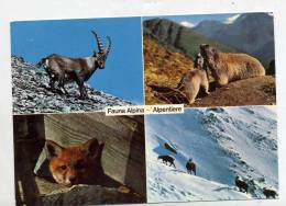 Carte Faune Alpine Chamois Marmotte Et - Animaux & Faune