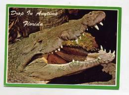 Carte Crocodile Floride Flamme Muette Orlando Sur Coquillage - Animaux & Faune