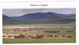 Mongolia,Asia,80-90s,Famo   Us  Horse Breeder Gathering His Horse & Selecting The Best Horse For The Race - Mongolia