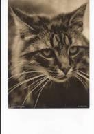 1930's Kodak Magazine Photograph - Cat Portrait - Other