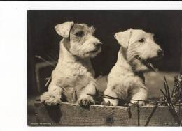1930's Kodak Magazine Photograph - Two Dogs - Other