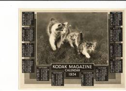 1930's Kodak Magazine Photograph - Cat And Kittens, 1934 Calendar - Photographs