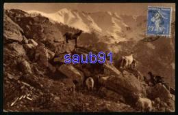 Vernet Les Bains  -  Sur Le Chemin Du Canigou - Troupeau -  Réf : 27920 - Autres Communes