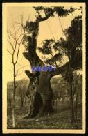 Le Boulou -  Etablissement  Hydrominéral à 300 Mètres - Le Chêne De Trabucaires -   Réf : 27913 - Autres Communes