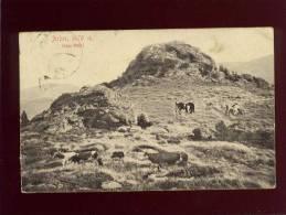 Arber 1476 M. Bayr.wald édit. Löffler N° 7494 Vaches - Bodenmais