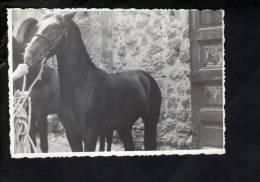 D2953 Cavallo, Horse, Cheval, Paard - Photographs