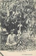 Afrique - Africa - Dahomey -ref A412- Un Cocaoyer - Coca - Theme Arbres -fruits -carte Bon Etat   - - Dahomey