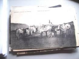 Afrika Africa Kameroen Cameroun Adamaua Cattle - Kameroen