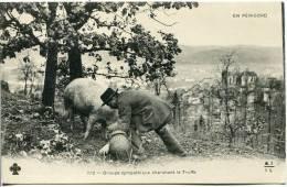 CPA    24-      En Périgord        Groupe Sympathique Cherchant La Truffe - France