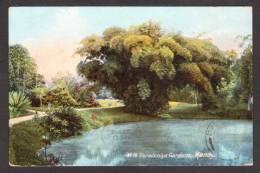 SR41) Ceylon - Kandy - Peradeniya Gardens - 1911 - Sri Lanka (Ceylon)