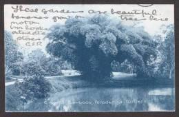 SR43) Ceylon - Peradeniya Gardens - Graceful Bamboos - 1907 - Sri Lanka (Ceylon)