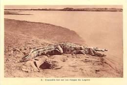 afrique - africa -tchad -ref A40-la chasse -crocodile tu� sur les rivages du logone -theme crocodiles- carte bon etat  -