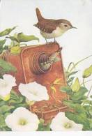 BIRD POSTCARD - COMMON WREN - Birds