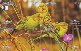 Bird PARROT Perroquet PAPAGAAI Papagei Oiseau (3) Puzzle Of 4 Phonecards - Puzzles
