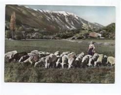 43295 -  Comtat Venaissin   Jeune Bergère Au Pied Du Mont Ventoux (84) - Costumes