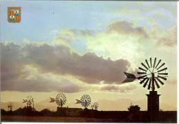 España--Mallorca--Molinos Al Atardecer-- - Molinos De Viento