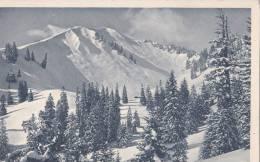 DER SCHONBERG, SNOW, FIL TREES, GENERAL VIEW, VERY RARE OVERPRINT STAMP - Schoenberg