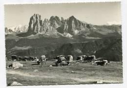 ITALY - AK 146164 Gruppo Del Sassolungo M.3178 - Italia