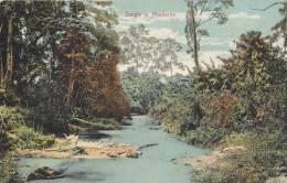 Postcard Jungle N Honduras1900-1910( Postally Not Used) - Honduras