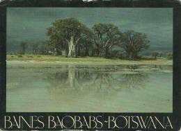 BAINES BAOBABS, BOTSWANA, AFRICA. - Botswana