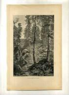- FRANCE . DANS UNE FORET DES VOSGES . GRAVURE SUR BOIS FIN XIXe S. - F. Trees & Shrub