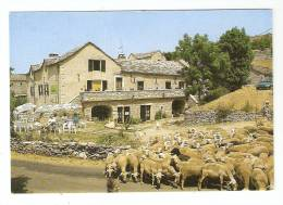 """CSM : 48 - Lozère : Nivoliers - Auberge """" Le Chanet"""" -  Le Causse Méjean  : Bâtiments Typiques , Touristes , Moutons . - France"""