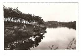 CSM :44 - Loire Atlantique : Savenay : Lac De La Vallée Mabille : Vue Peu Commune - Savenay