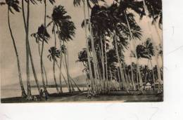 SAMOA , Palmizi  * - Samoa