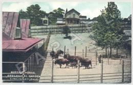 Cincinnati (États-Unis) - Zoological Garden - Buffalo House - Circulé En 1910 (JS) - Animals