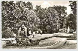 Berlin (Allemagne) - Zoologischen Gartens - Promenade ... Gorille Bobby Grandeur Nature (JS) - Animaux & Faune