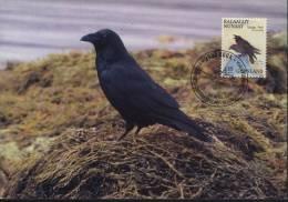 Greenland  MaxiCard Sc 180  Corvus Corax Bird - Groenland
