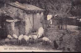 NOS CAMPAGNES Petit Déjeuner En Famille - Cochons