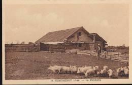 3 8 Chaumergy La Porcherie - Cochons