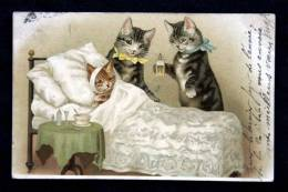 Petits Chats Chatons Humanisés Illustration 1902 Chat Buvant Du Thé -  Humanised Cat Gato - Chat Malade Et Docteur - Gatti