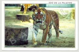 Les Mathes (17) - Zoo De La Palmyre - Tigre (JS) - Tigres