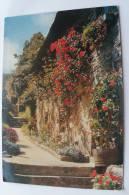 Maisons Fleuries De Bretagne - Magnifiques Rosiers Grimpants - Bretagne