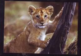 LIONS LIONET CPI - Lions