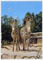 Hanovre (Allemagne) - Zoologischer Garten - Zèbres De Grévy (Lire Descriptif) (JS) - Zebras