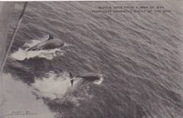 Porpoises Swimming Ahead Of A U S Battleship Albertype - Other