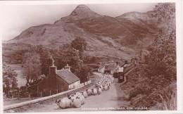 21843 Changing Pastures , Glen Coe Village -1780 JB White, Real Photo Mouton Transumance Brebie