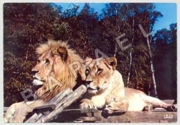 Thoiry (78) - Château De Thoiry - Lion Et Lionne En Liberté (JS) - Lions
