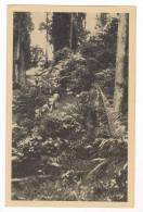 South Pacific, 30-40s  Men On Jungle Trail - Postcards