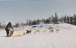 Dogsled Team Heading Home, Yellowknife, Northwest Territories, Canada, 40-60´s - Yellowknife