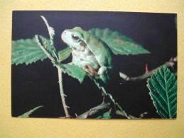 La Reinette Verte. - Animales